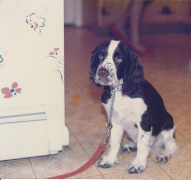 Laurie Fass Dog Training The Most Valuable Training Tip