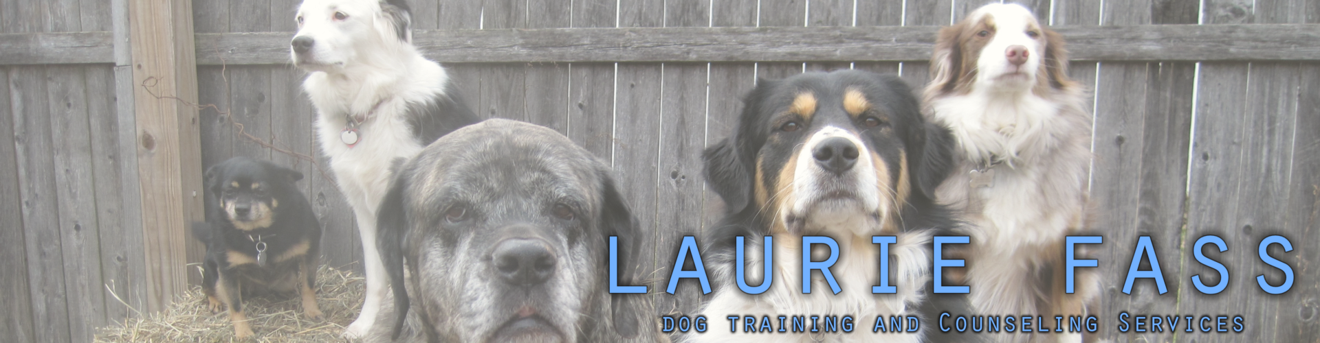 http://www.lauriefassdogtraining.com/wp-content/uploads/2020/09/cropped-dogs_blogbanner-1-1.png